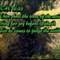 Singing Trees - New500.jpg